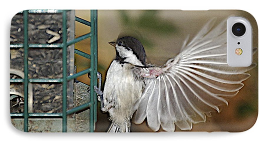 Chickadee In Flight IPhone 7 Case featuring the photograph Fan Dance by Faith Harron Boudreau