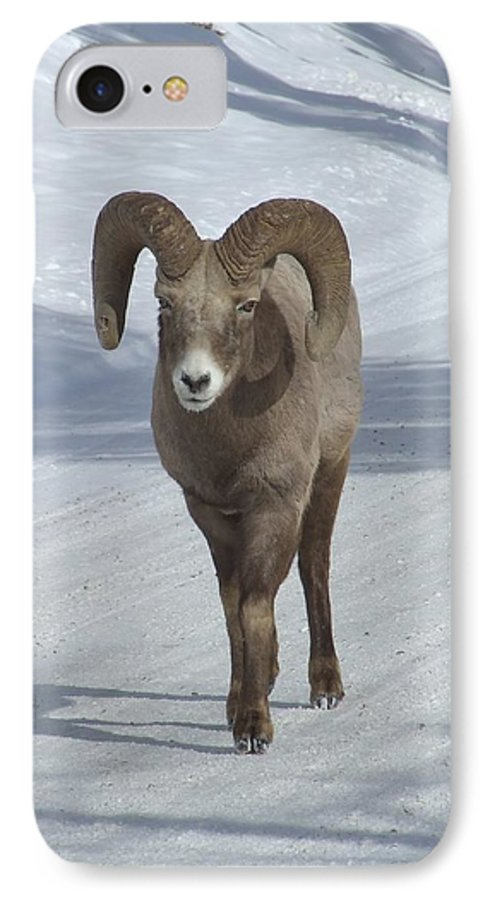 Bighorn Sheep IPhone 7 Case featuring the photograph Farewell To The King by Tiffany Vest