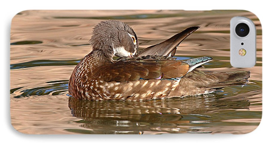 Wood Duck IPhone 7 Case featuring the photograph Female Wood Duck Preening On The Water by Max Allen