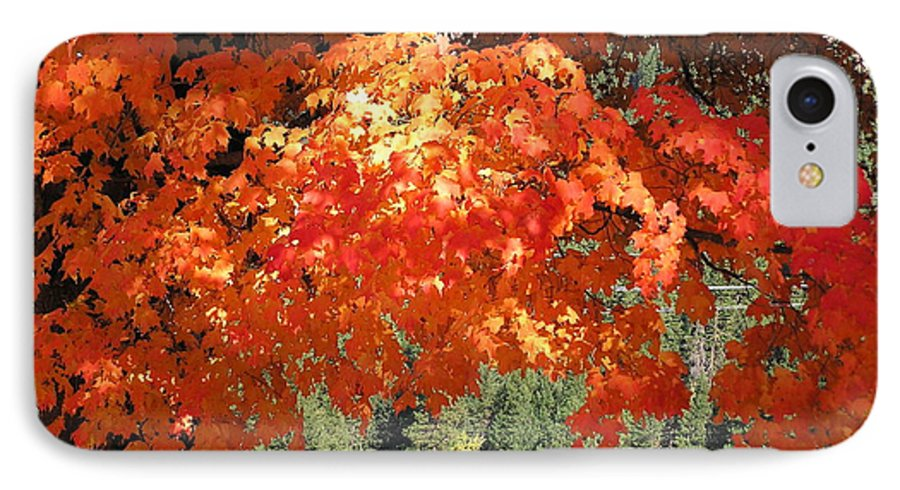Autumn Photographs IPhone 7 Case featuring the photograph Flickering Sunlight by Louise Magno