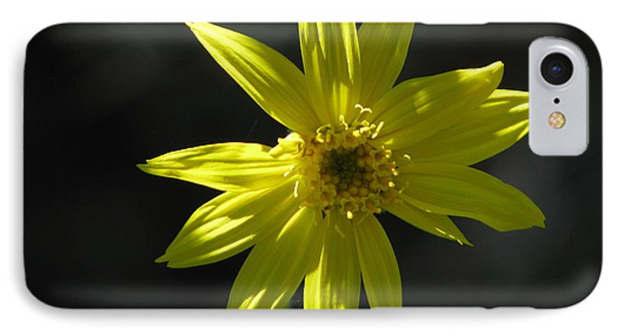 Light IPhone 7 Case featuring the photograph Floral by Amanda Barcon