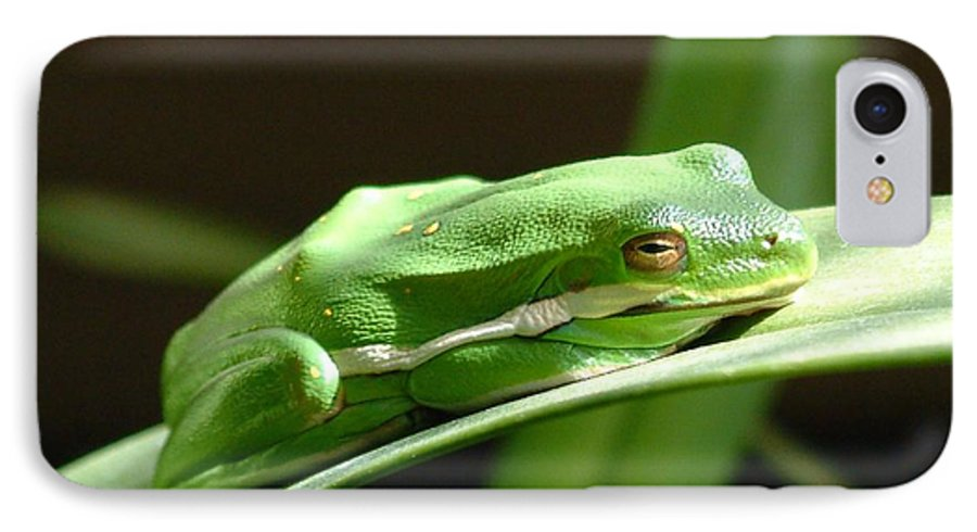 Frog IPhone 7 Case featuring the photograph Florida Tree Frog by Ned Stacey