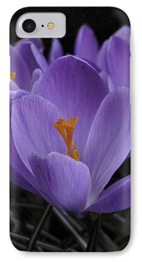 Flowers IPhone 7 Case featuring the photograph Flower Crocus by Nancy Griswold