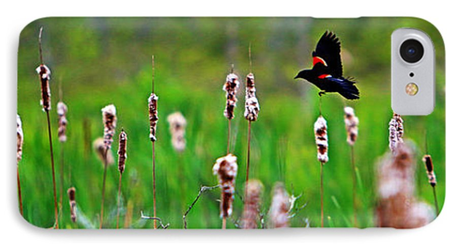 Sun IPhone 7 Case featuring the photograph Flying Amongst Cattails by James F Towne
