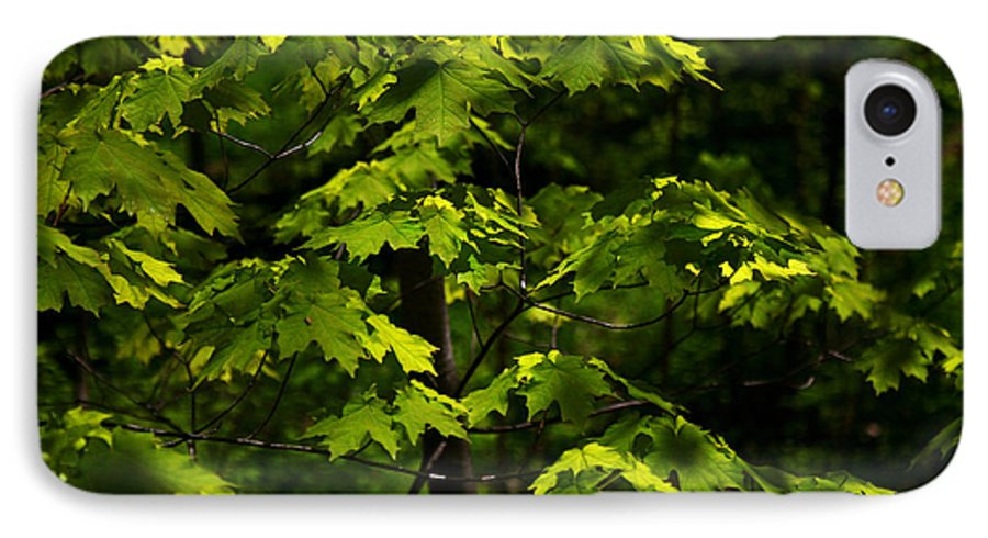 Forest IPhone 7 Case featuring the photograph Forest Shades by Randy Oberg