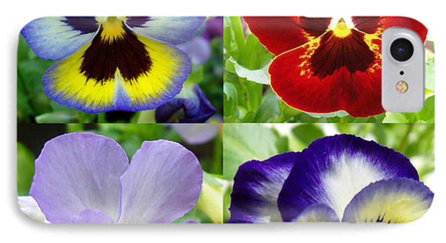 Pansy IPhone 7 Case featuring the photograph Four Pansies by Nancy Mueller