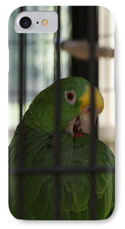 Parrot IPhone 7 Case featuring the photograph Framed by Shelley Jones