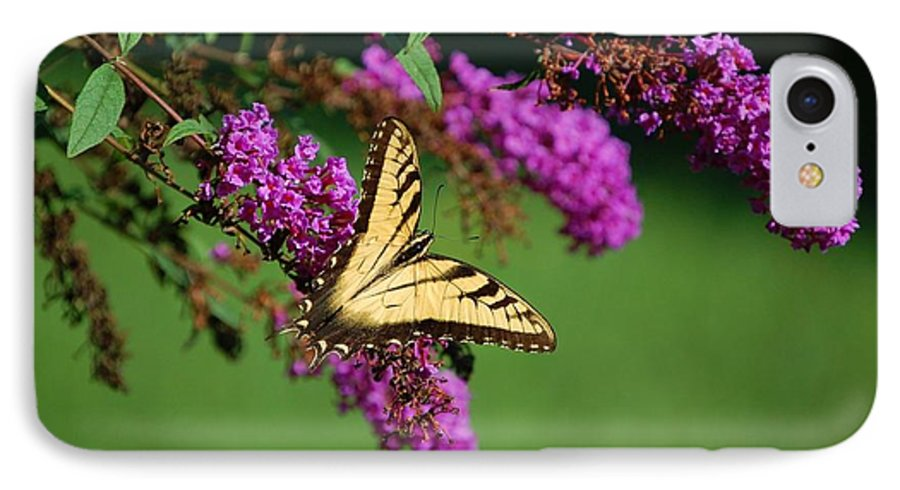 Butterfly IPhone 7 Case featuring the photograph Freedom by Debbi Granruth