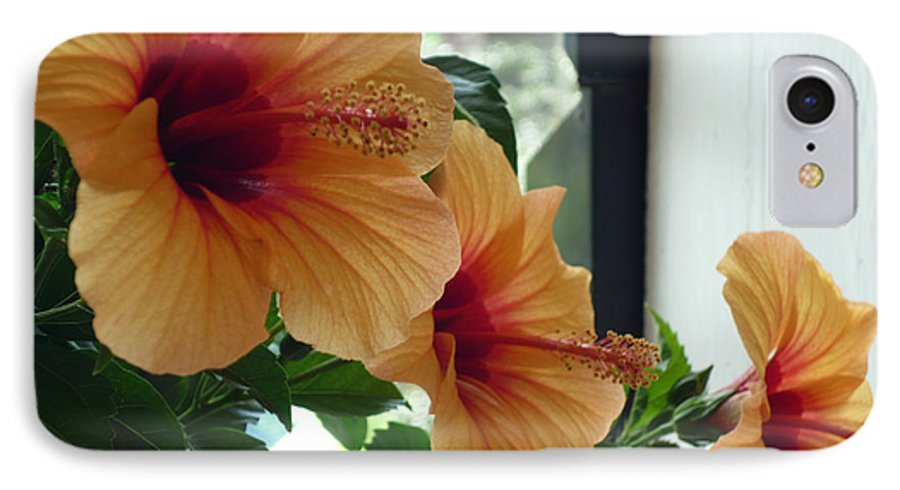 Photography Flower Floral Bloom Hibiscus Peach IPhone 7 Case featuring the photograph Friends For A Day by Karin Dawn Kelshall- Best