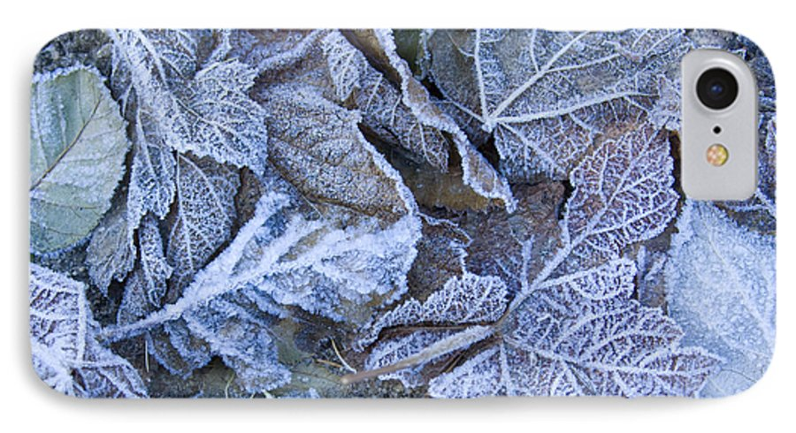 Frost IPhone 7 Case featuring the photograph Frost by Idaho Scenic Images Linda Lantzy