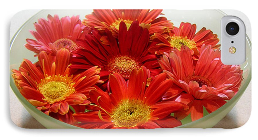 Nature IPhone 7 Case featuring the photograph Gerbera Daisies - A Bowl Full by Lucyna A M Green