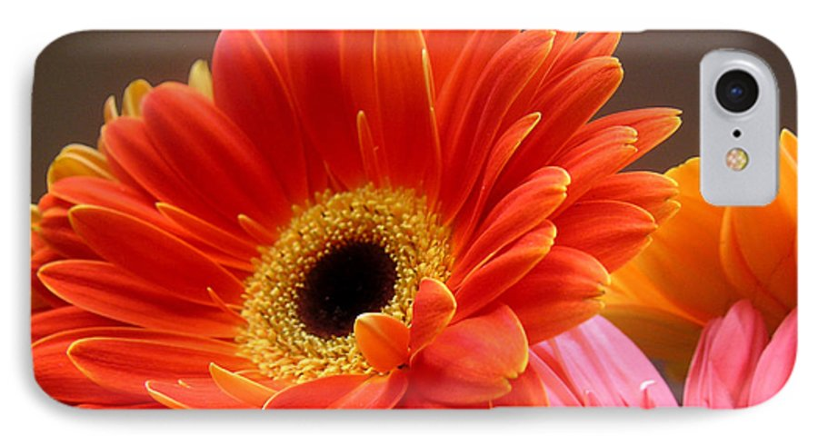 Nature IPhone 7 Case featuring the photograph Gerbera Daisies - Luminous by Lucyna A M Green