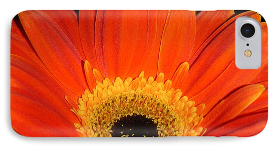 Nature IPhone 7 Case featuring the photograph Gerbera Daisy - Glowing In The Dark by Lucyna A M Green