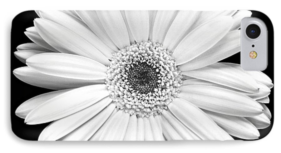 Gerber IPhone 7 Case featuring the photograph Single Gerbera Daisy by Marilyn Hunt