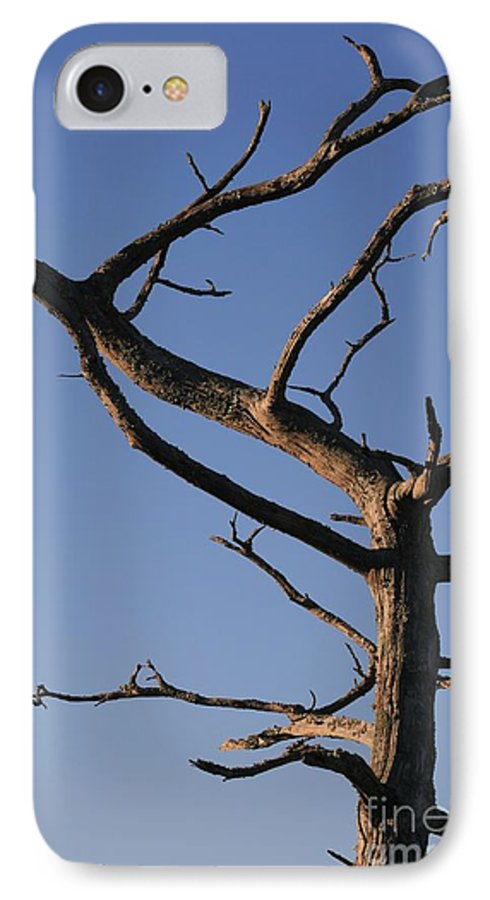 Tree IPhone 7 Case featuring the photograph Gnarly Tree by Nadine Rippelmeyer