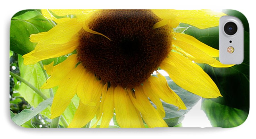 Sunflower IPhone 7 Case featuring the photograph Golden Beauty by Idaho Scenic Images Linda Lantzy