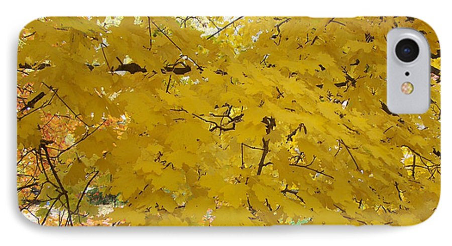Fall Autum Trees Maple Yellow IPhone 7 Case featuring the photograph Golden Canopy by Karin Dawn Kelshall- Best