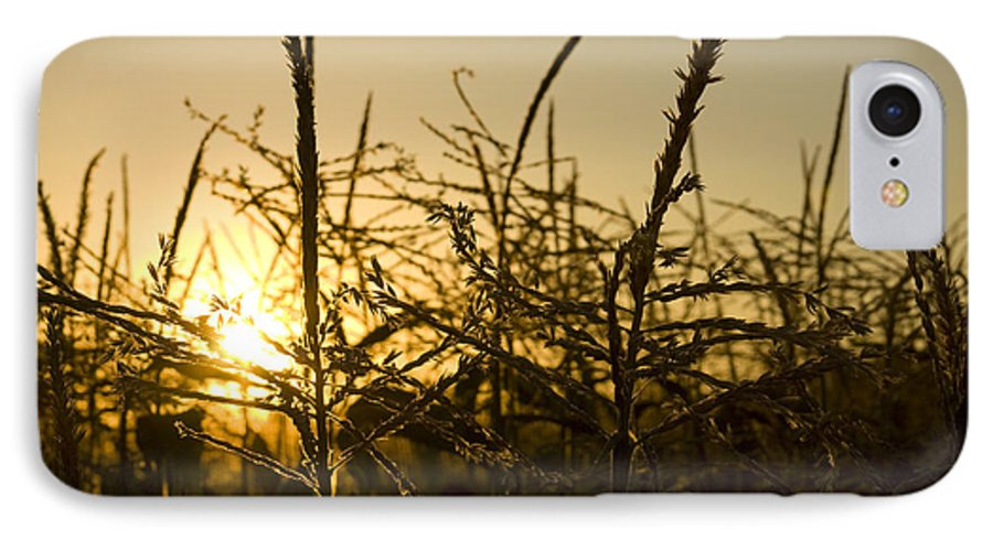 Golden IPhone 7 Case featuring the photograph Golden Corn by Idaho Scenic Images Linda Lantzy