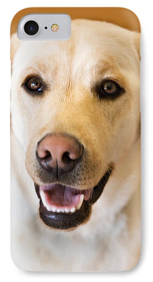 Lab IPhone 7 Case featuring the photograph Golden Lab by Marilyn Hunt