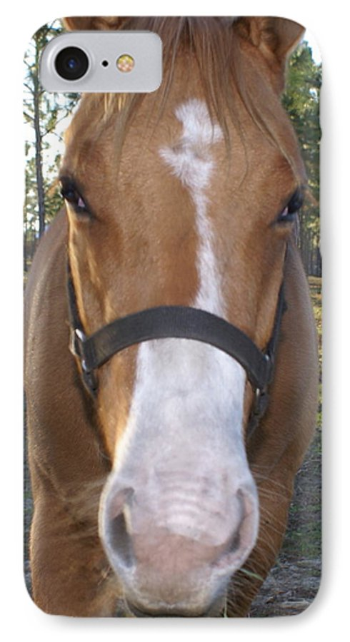 Horse IPhone 7 Case featuring the painting Got Sugar by Debbie May
