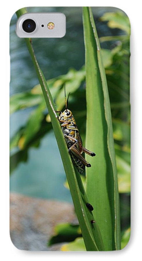 Field IPhone 7 Case featuring the photograph Grasshopper by Margaret Fortunato