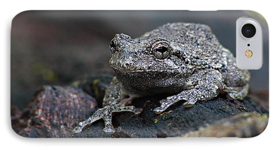 Frog IPhone 7 Case featuring the photograph Gray Treefrog On A Log by Max Allen