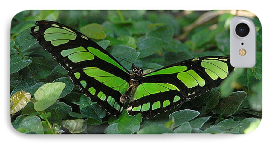 Green IPhone 7 Case featuring the photograph Green Butterfly by Louise Magno