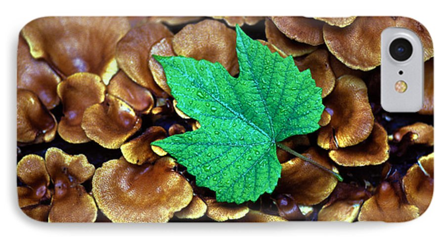 Nature IPhone 7 Case featuring the photograph Green Leaf On Fungus by Carl Purcell