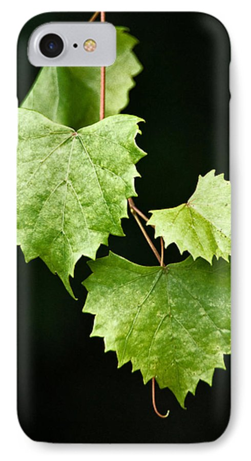 Flora IPhone 7 Case featuring the photograph Green Leaves by Christopher Holmes