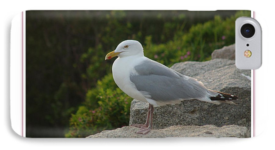 Landscape IPhone 7 Case featuring the photograph Gull Able by Peter Muzyka