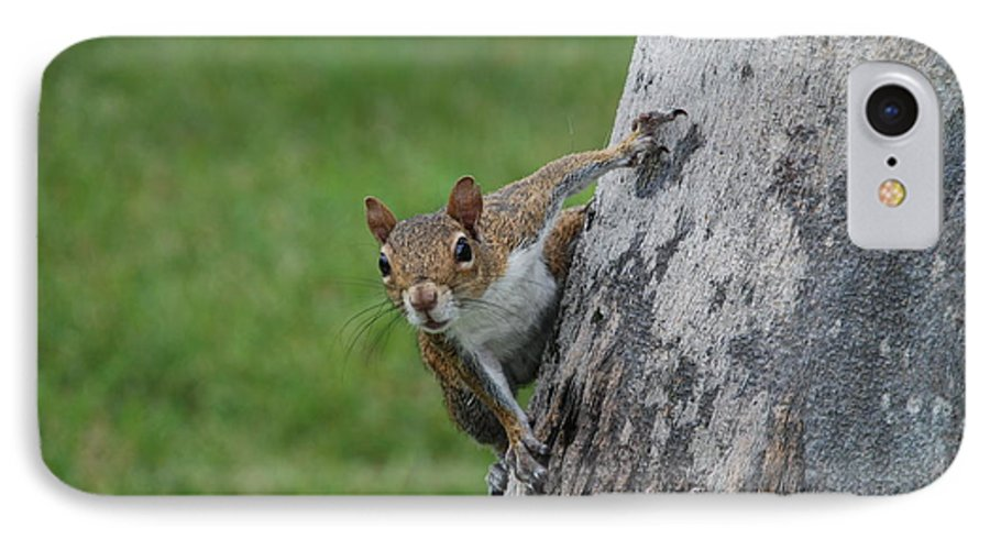 Squirrel IPhone 7 Case featuring the photograph Hanging On by Rob Hans
