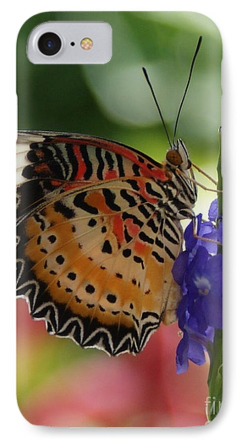 Butterfly IPhone 7 Case featuring the photograph Hanging On by Shelley Jones