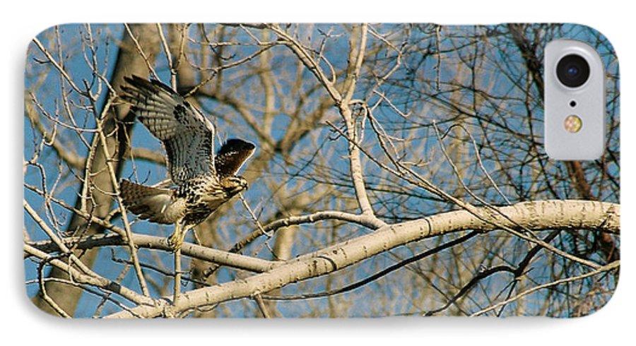 Hawk IPhone 7 Case featuring the photograph Hawk by Steve Karol