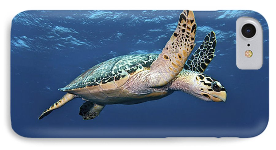 Caribbean IPhone 7 Case featuring the photograph Hawksbill Sea Turtle In Mid-water by Karen Doody