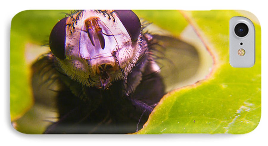 Fly IPhone 7 Case featuring the photograph Hi There by Douglas Barnett