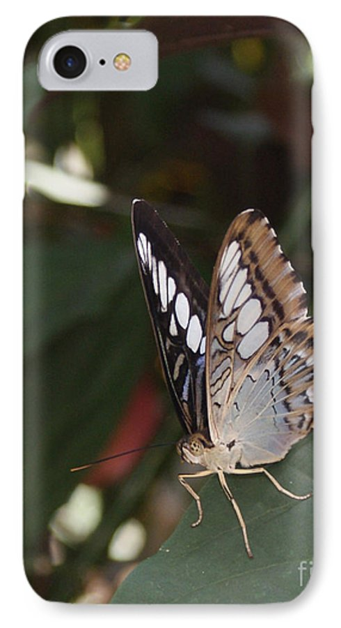 Butterfly IPhone 7 Case featuring the photograph Hints Of Blue by Shelley Jones