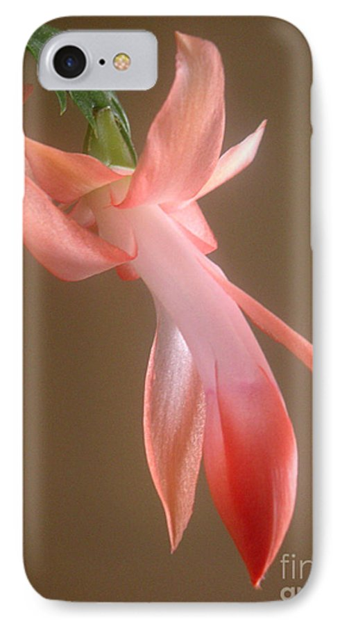 Nature IPhone 7 Case featuring the photograph Holiday Cactus - In Day Light by Lucyna A M Green