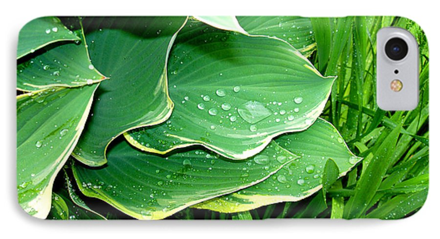 Hostas IPhone 7 Case featuring the photograph Hosta Leaves And Waterdrops by Nancy Mueller