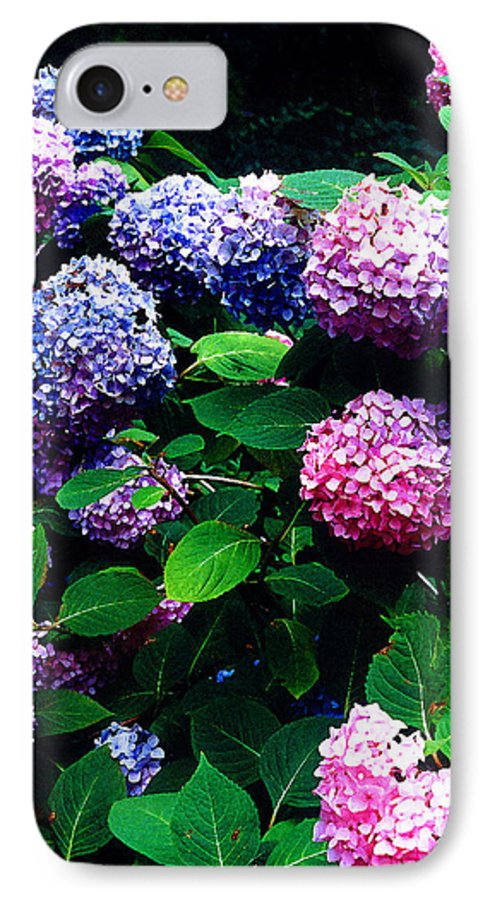 Flowers IPhone 7 Case featuring the photograph Hydrangeas by Nancy Mueller