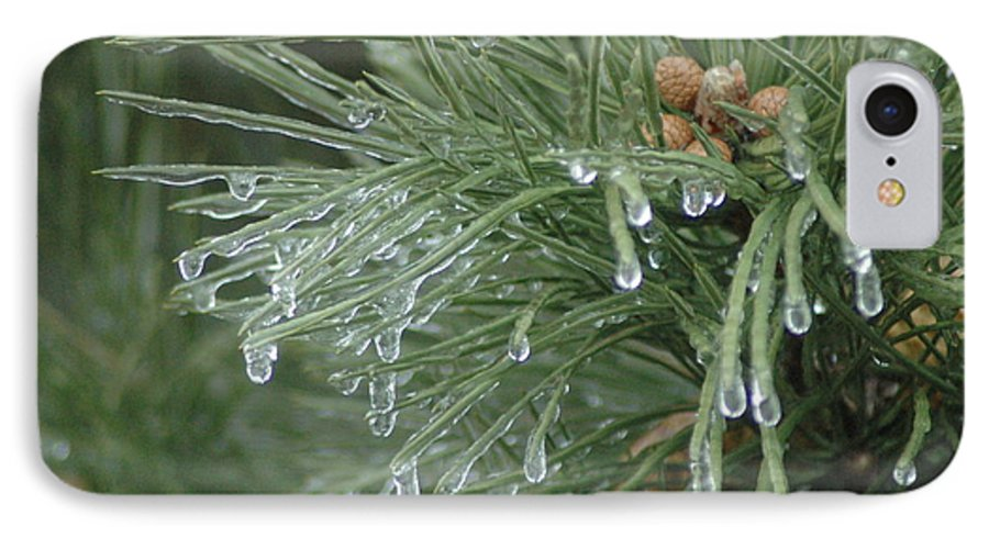 Nature IPhone 7 Case featuring the photograph Iced Pine by Kathy Schumann