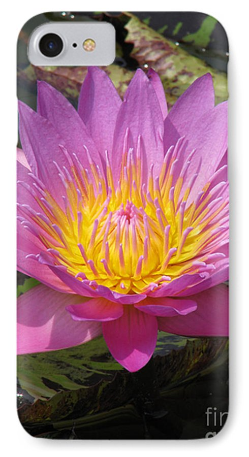 Lotus IPhone 7 Case featuring the photograph In Position by Amanda Barcon