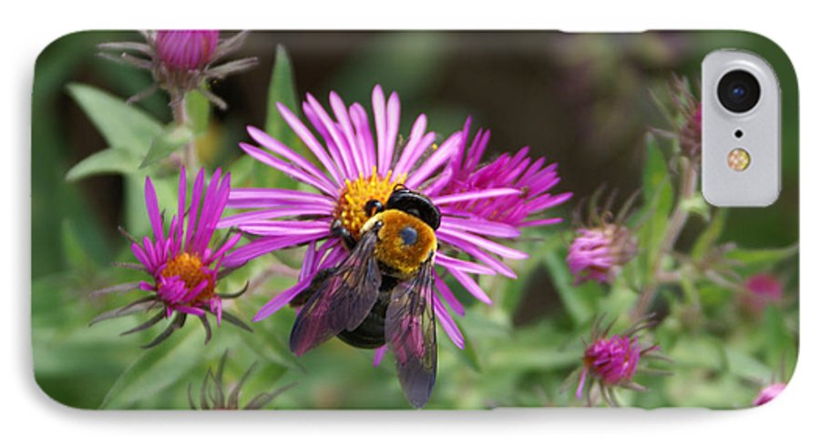 Bumble Bee IPhone 7 Case featuring the photograph Just Beeing Debbie-may by Debbie May