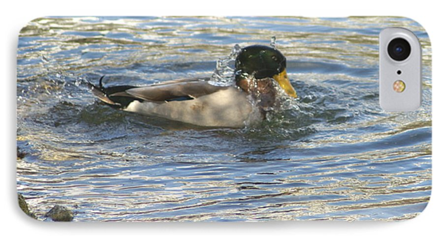 Ducks IPhone 7 Case featuring the photograph Just Ducking Around by Debbie May