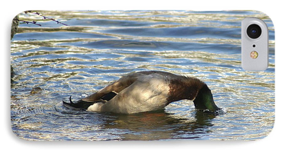 Duck IPhone 7 Case featuring the photograph Just One More Peek by Debbie May