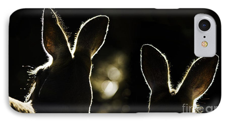 Kangaroo IPhone 7 Case featuring the photograph Kangaroos Backlit by Sheila Smart Fine Art Photography