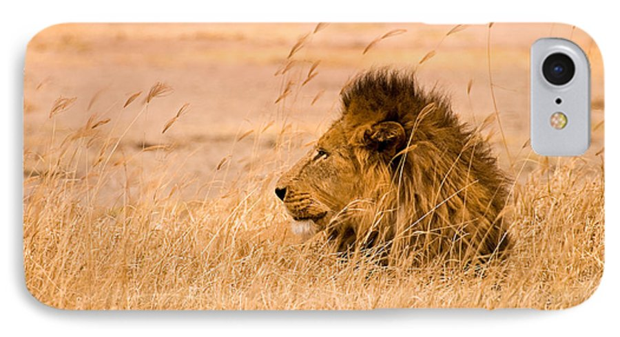 3scape IPhone 7 Case featuring the photograph King Of The Pride by Adam Romanowicz