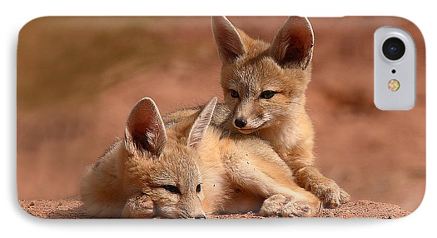 Fox IPhone 7 Case featuring the photograph Kit Fox Pups On A Lazy Day by Max Allen