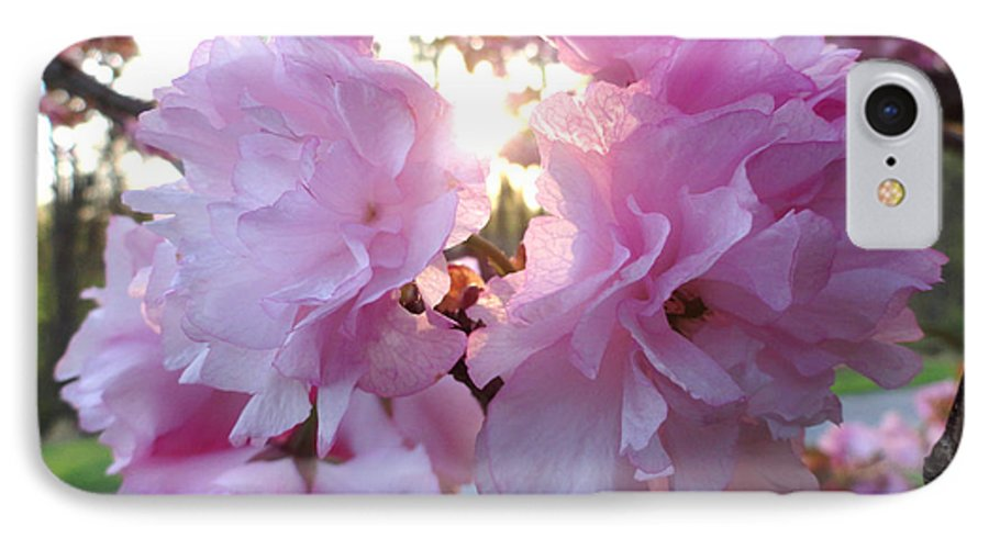 Kwanzan IPhone 7 Case featuring the photograph Kwanzan Cherry Blossom by Christopher Spicer