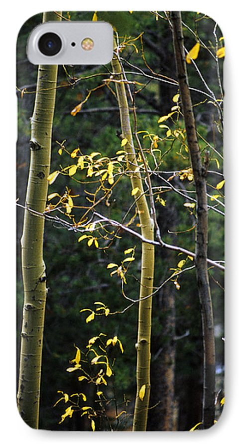 Aspen IPhone 7 Case featuring the photograph Late Aspen by Jerry McElroy