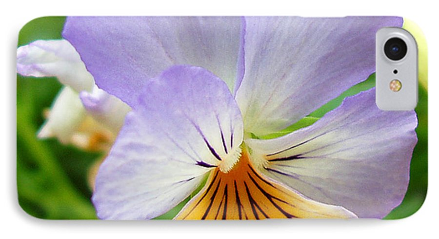 Pansy IPhone 7 Case featuring the photograph Lavender Pansy by Nancy Mueller